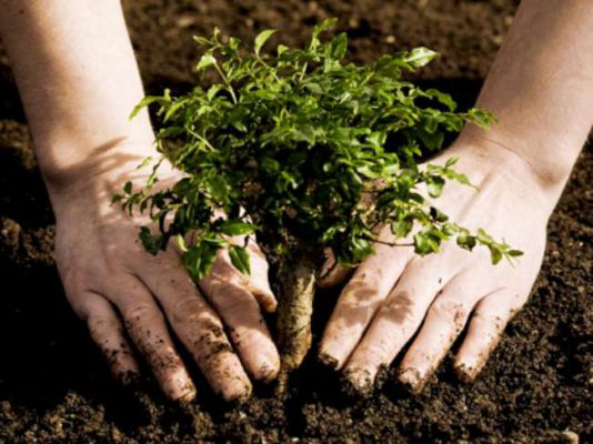 Сергей Собянин: этой весной в Москве будет высажено 380 тысяч деревьев и кустарников