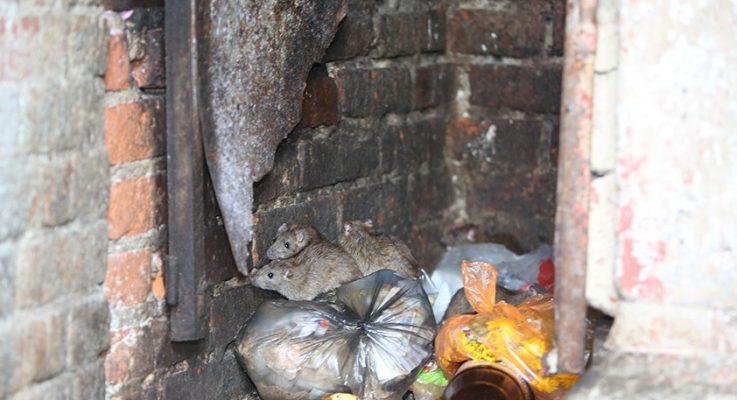Живущие в мусоропроводе