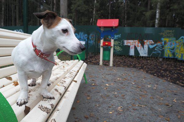 С собакой – на площадку