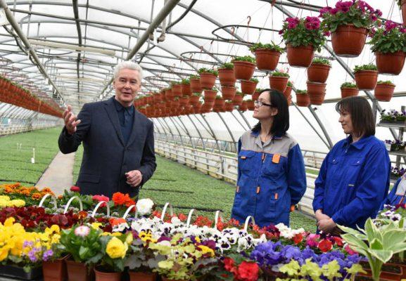 В этом году летнюю Москву украсит 61 миллион цветов – Собянин