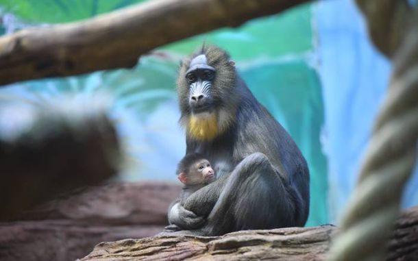 С 1 апреля Московский зоопарк будет работать по летнему расписанию