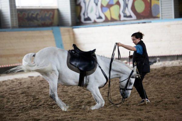 Строительство конно-спортивного комплекса в поселке Северный завершат в 2018 году