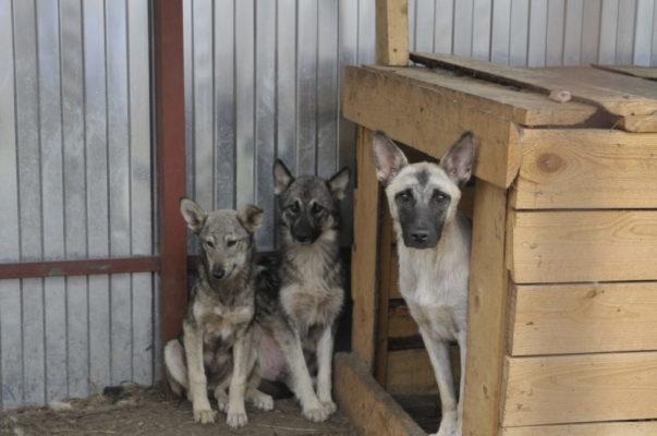 Дом для бродячих собак