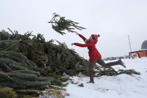 Москвичи уже сдали более 2,6 тыс деревьев в рамках акции «Елочный круговорот»