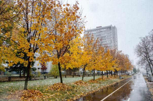 Листья жёлтые