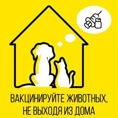 Ветеринары сделают прививку животным на дому