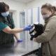 Человек не может заразиться коронавирусом от животного