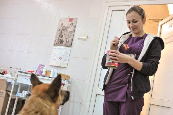 Депутаты МГД рассказали об итогах ежегодной акции помощи приютам для животных «Лучший друг»