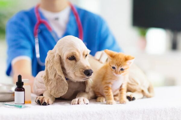 Жителям порекомендовали своевременно вакцинировать домашних животных