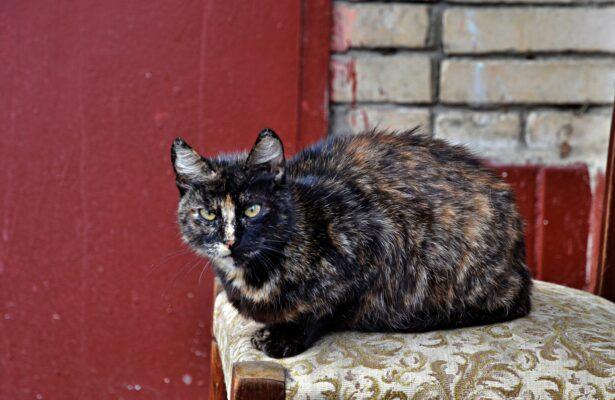 Волонтеры проекта «ЗооМониторинг» посчитают, сколько бездомных кошек в Москве