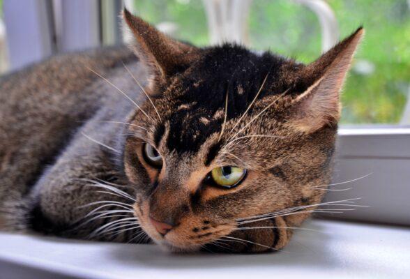 Около 17 тысяч кошек и собак содержат в столичных приютах