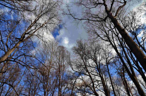 Более 15000 горожан приняли участие в проекте «Наше дерево» за два года