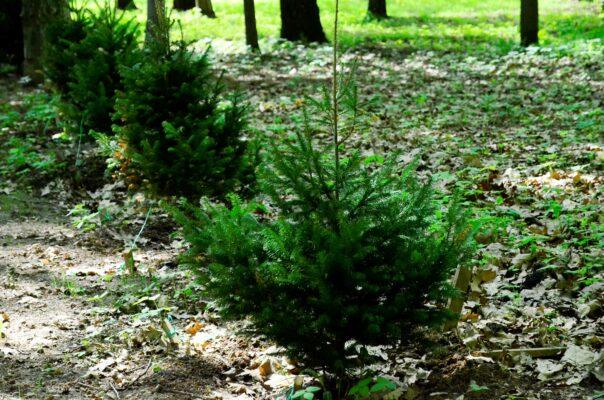 Почти 7,5 тысячи деревьев высадили в рамках проекта «Наше дерево»