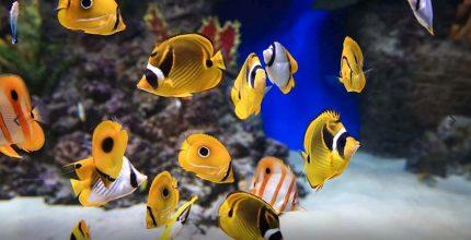 «Москвариум» проведет специальную программу мероприятий ко Всемирному дню моря 30 сентября